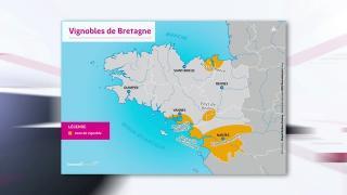 La vigne en Bretagne